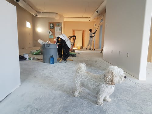 A dog standing in a room